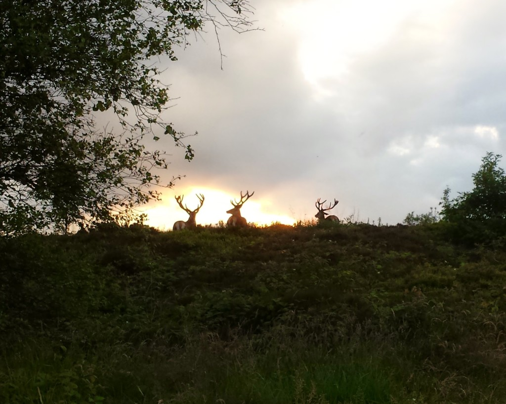 Stags on Blackamoor